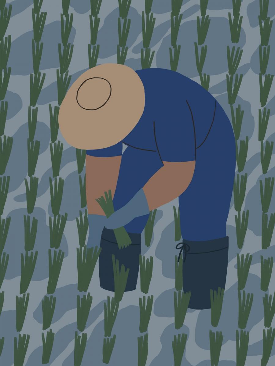 Căn bệnh giết người bị lãng quên: Đôi chân đất của người nông dân và siêu vi khuẩn dưới bùn ruộng