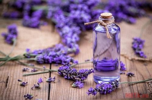 Tinh dầu hoa oải hương giúp làm dịu da cháy nắng